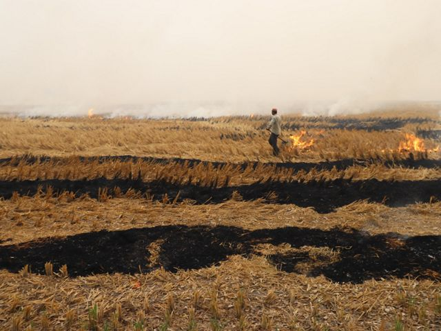 Crop residue burning has become a major source of air pollution in northwest India, where close to 23 million tons of rice straw is burnt annually.