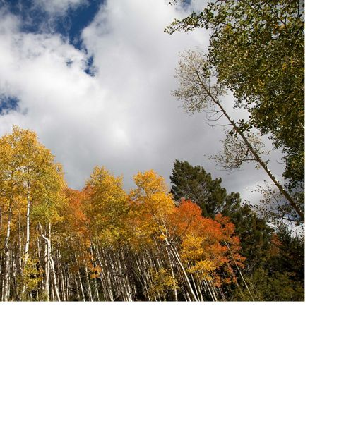 Fall colors in New Mexico.