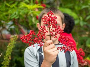 child holding red elderberry branch