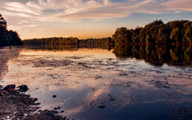 Green trees edge the banks of the Potomac River at dusk. Vegetation floats at the surface at the shallow water.