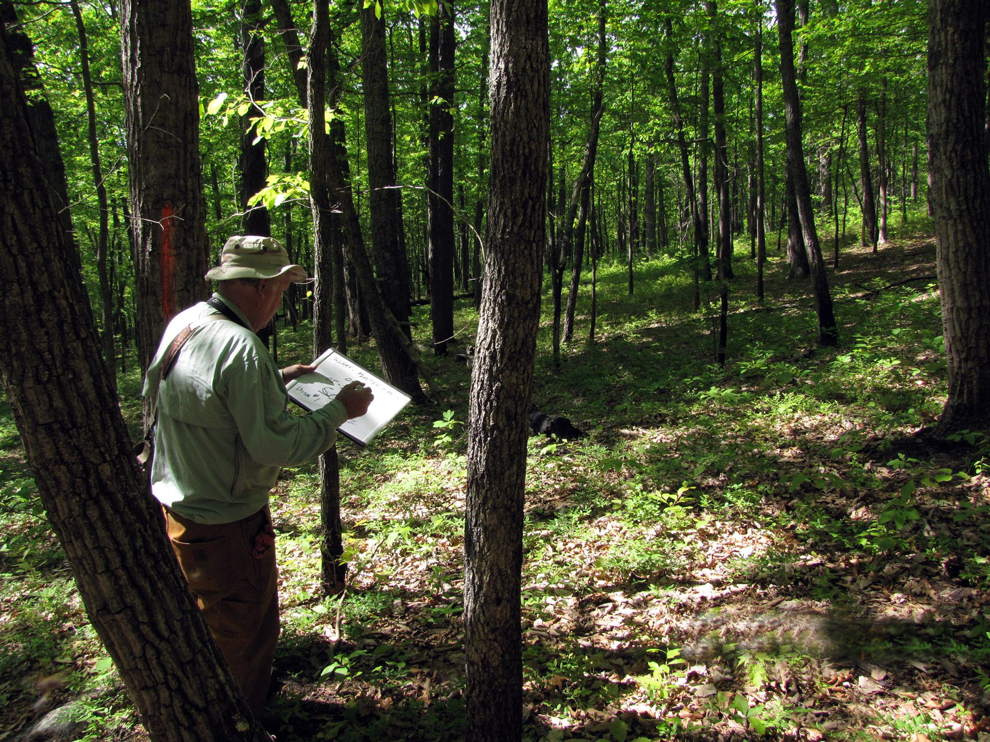 A man stands in a forest holding a clipboard and recording notes about the bird species observed in the area. Light dapples the forest floor as it filters through the thick trees.