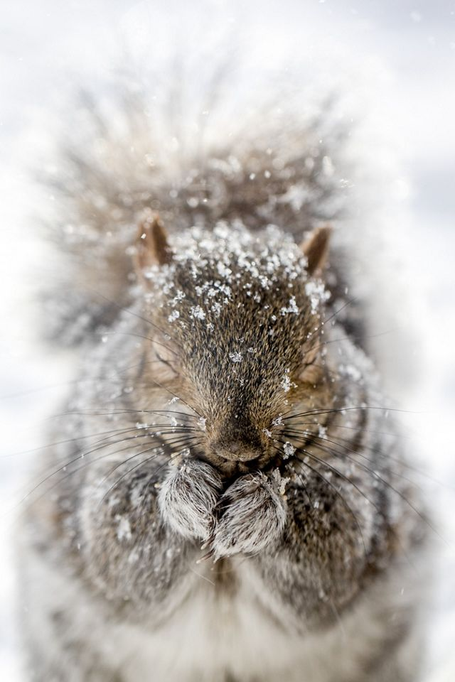A squirrel in the photographer's backyard in the winter in Quebec, Canada. This photo was entered into The Nature Conservancy's 2018 Photo Contest.
