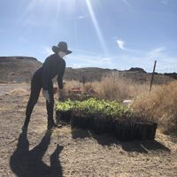 Brittney Cade begins unloading the first batches of 30,000 trees to plant in the Oasis Valley