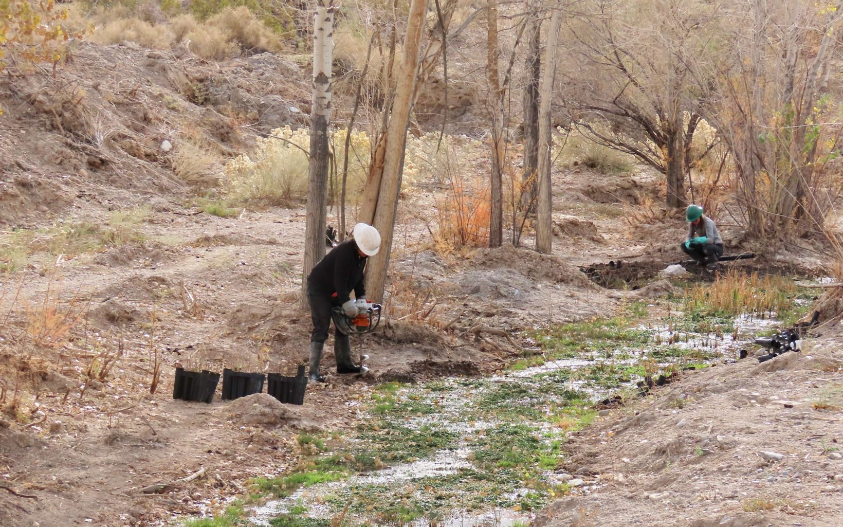 A worker in a hard hat uses an awl to drill a hole for tree planting next to a dry stream bed.
