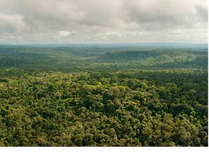 An aerial view of a portion of the remaining Amazon rainforest at São Félix do Xingu, a municipality that has one of the highest rates of deforestation in the country.