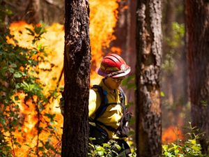 A woman wearing a red hard hat and yellow fire gear walks between two tall pine trees during a controlled burn at a TNC preserve. Flames rise behind her, taller than her head and rising out of frame.