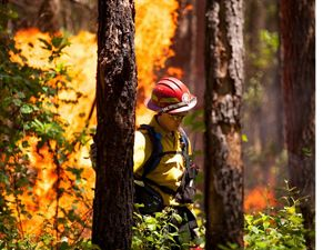 An Americorps volunteer walks through Piney Grove Preserve during a controlled burn.