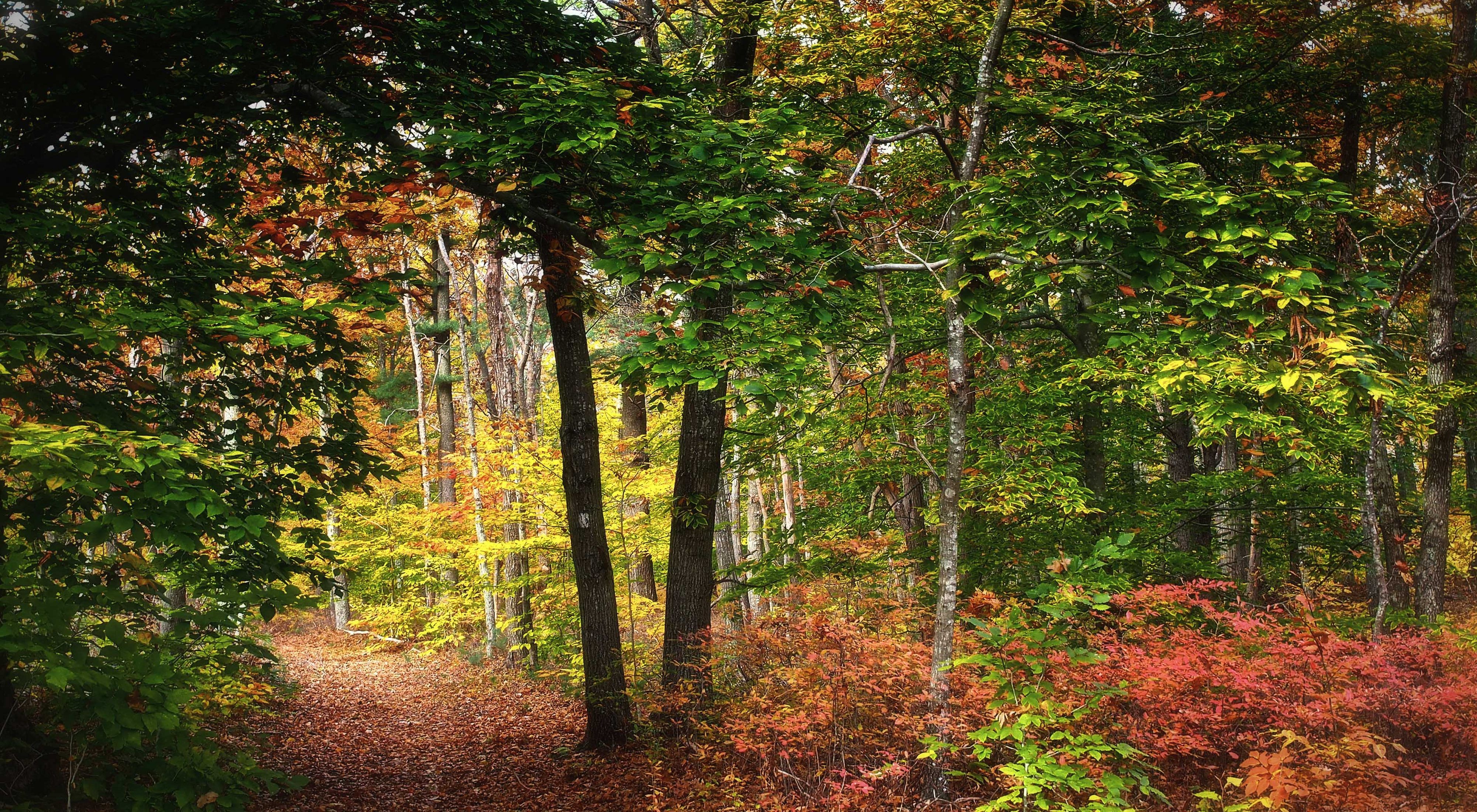 Looking into a forest with green, orange, and yellow colored tree leaves.