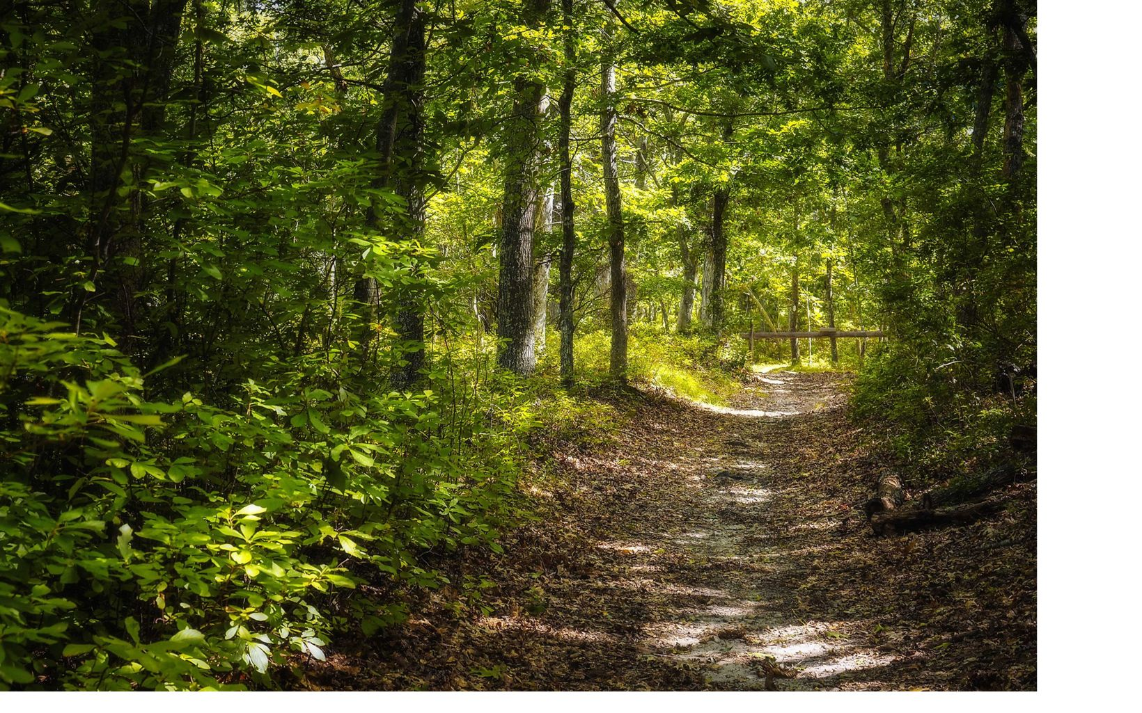 The main trail of the Grace Estate is surrounded by beautiful woodlands.