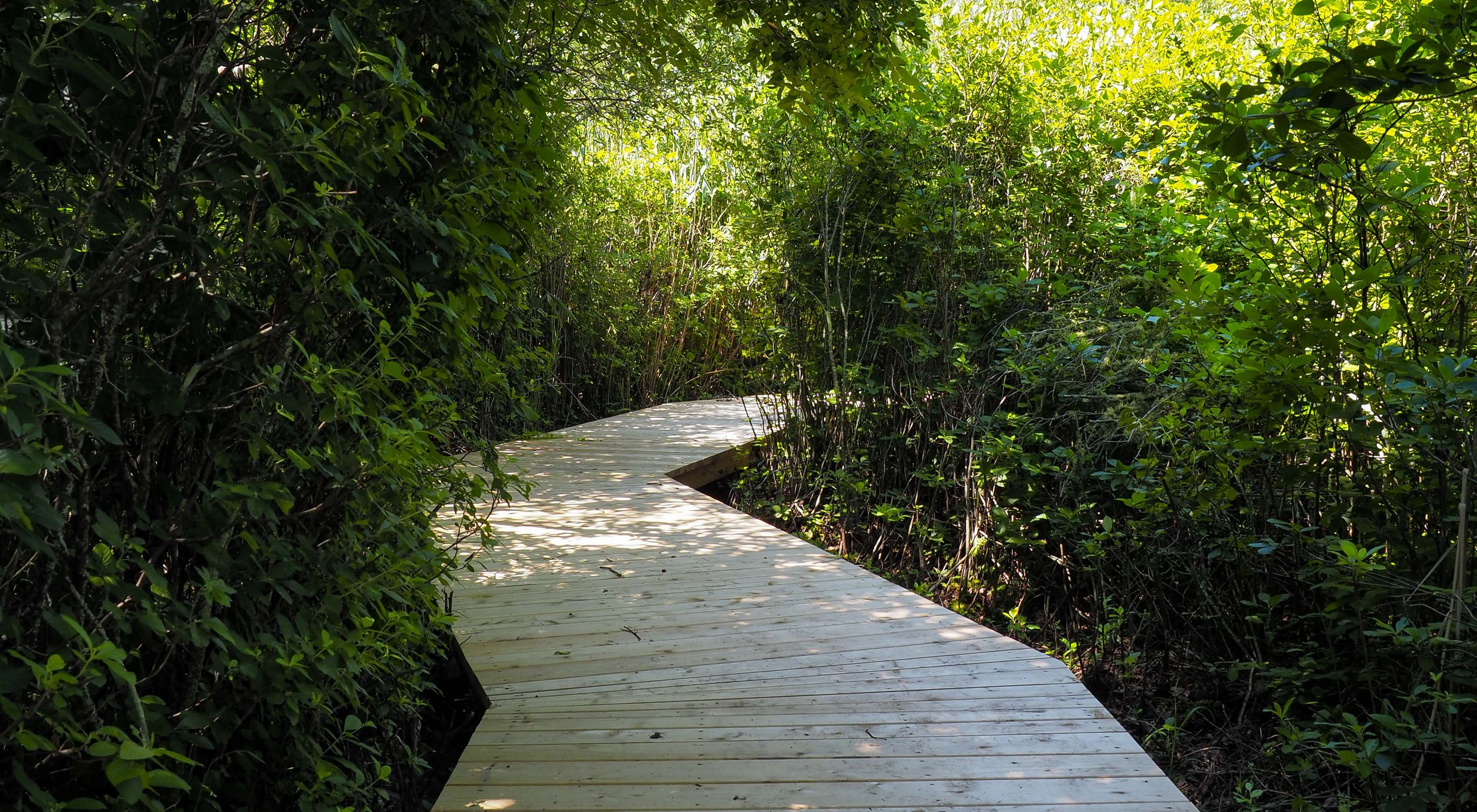 Take a walk on the boardwalk at our Sagg Swamp Preserve on Long Island