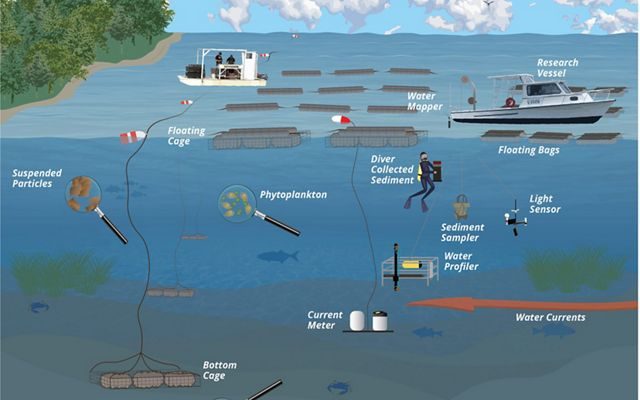 An illustration of the aquaculture methods used by the growers and the environmental variables measured by the study.