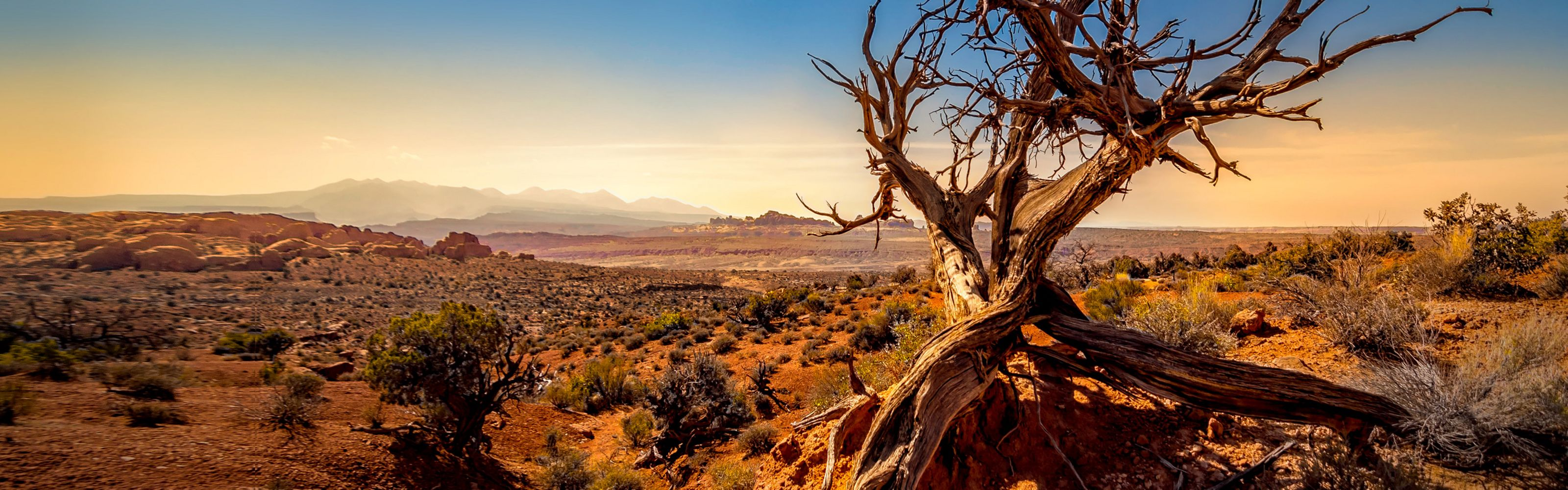 stands watch over Arches National Park in Southern Utah. This tree has twisted in the elements for longer than any of us has been around.