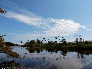 Birds flying over a wetland.