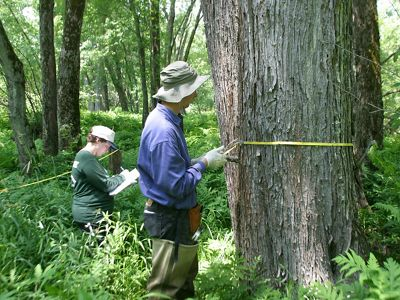 Scientists measure trees in a floodplain forest.