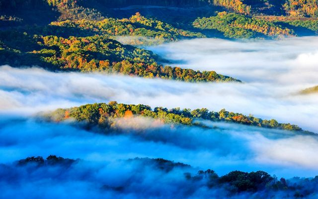 Aerial view of a forest in low clouds.