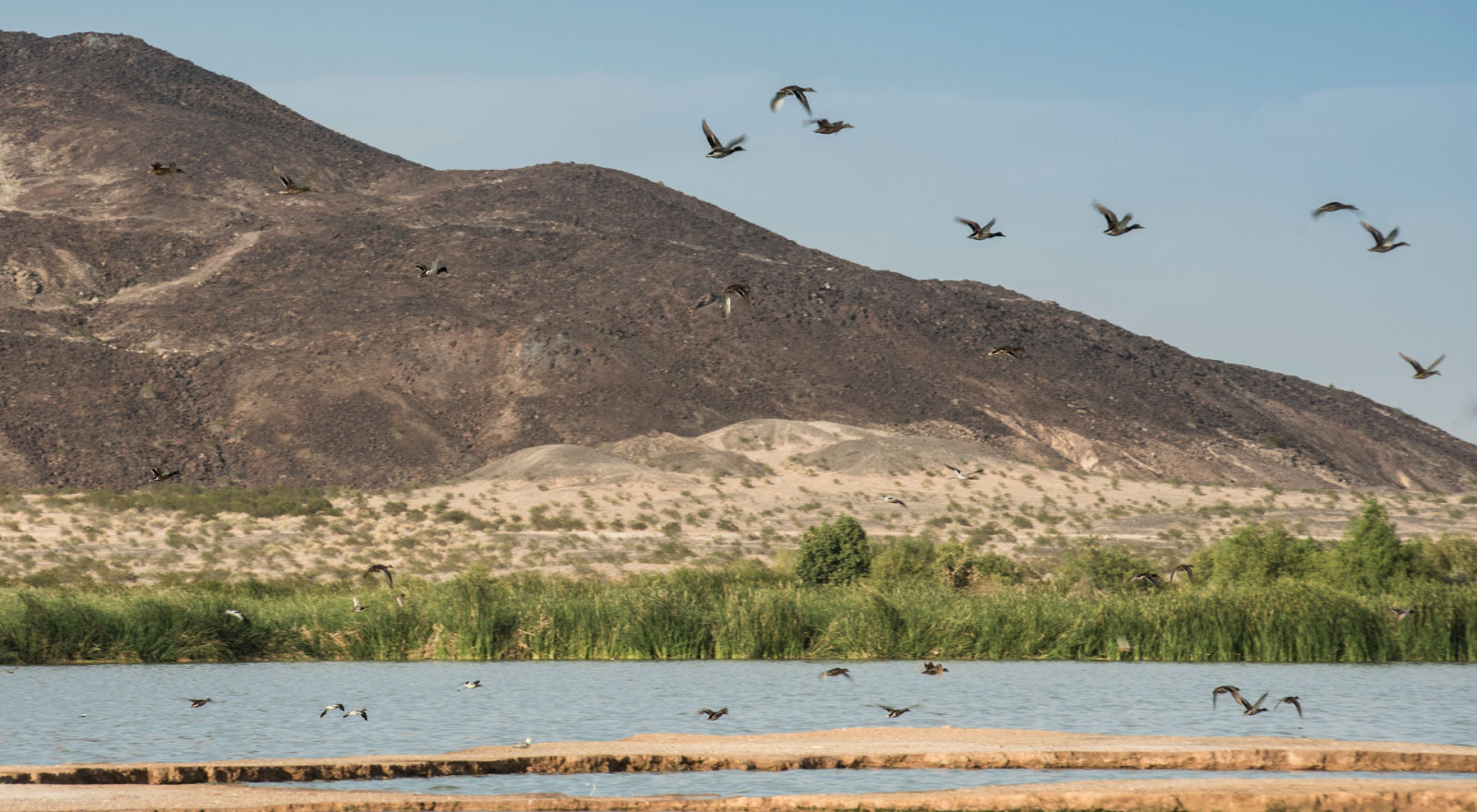 Birds flying above Las Arenitas wetland.