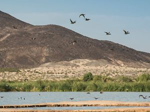 Birds flying above Las Arenitas wetlands