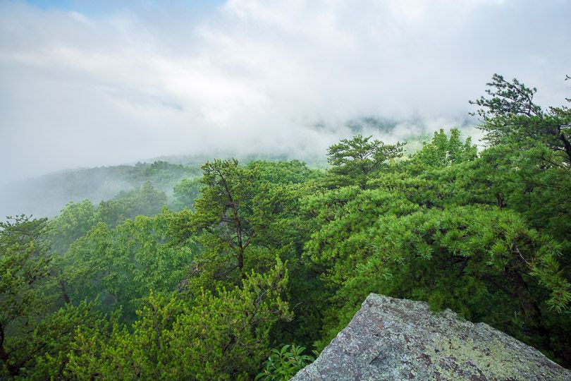 Clouds cover a rocky outcrop surrounded by trees.