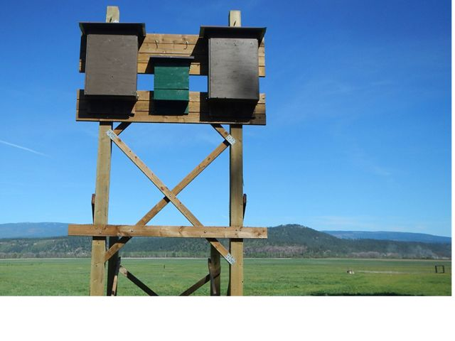 Two large bat boxes on a posts in wetland field