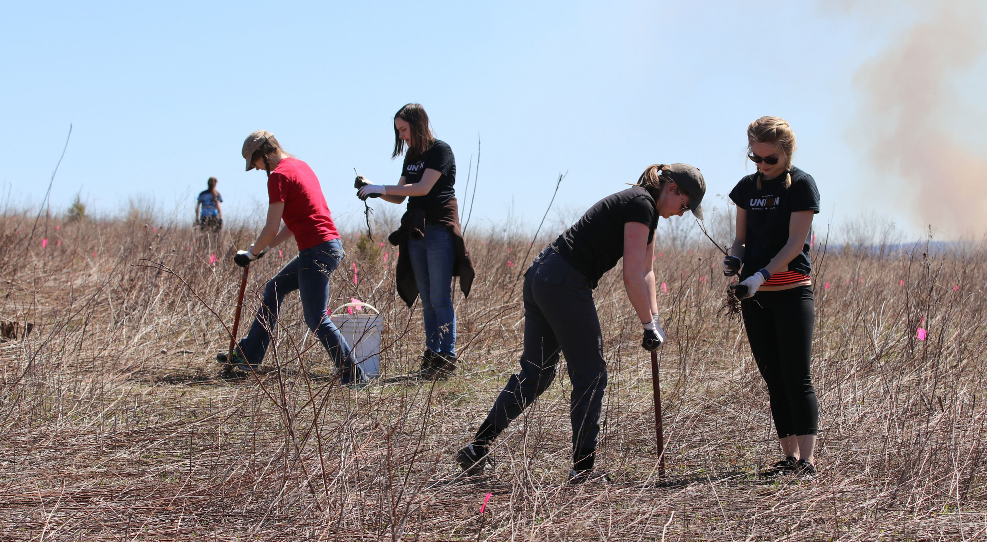 Four volunteers work with tree planting tools in a grassy field.