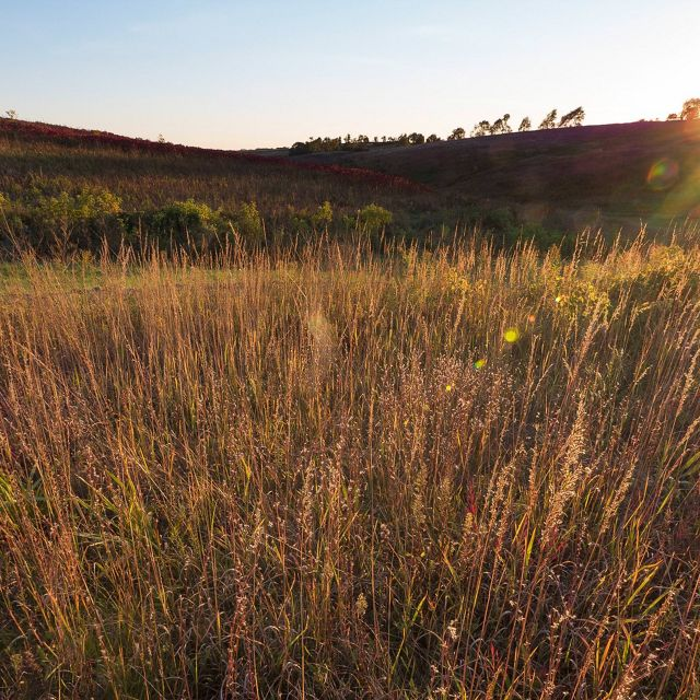 Photo of sun rising over a Wisconsin tallgrass prairie.