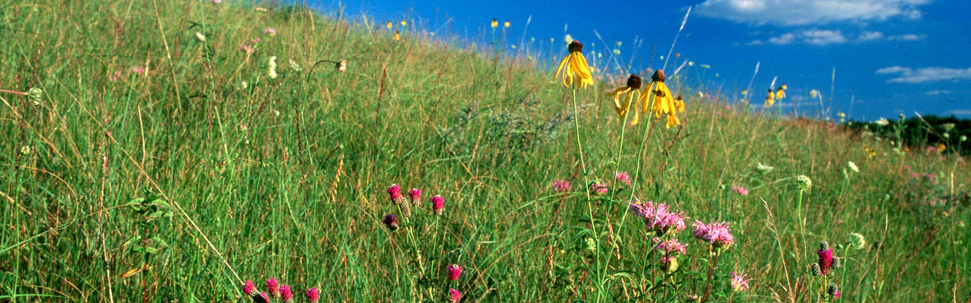 , Military Ridge Prairie Heritage Area, Wisconsin.