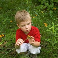 A young boy in a red shirt examines a yellow flower.