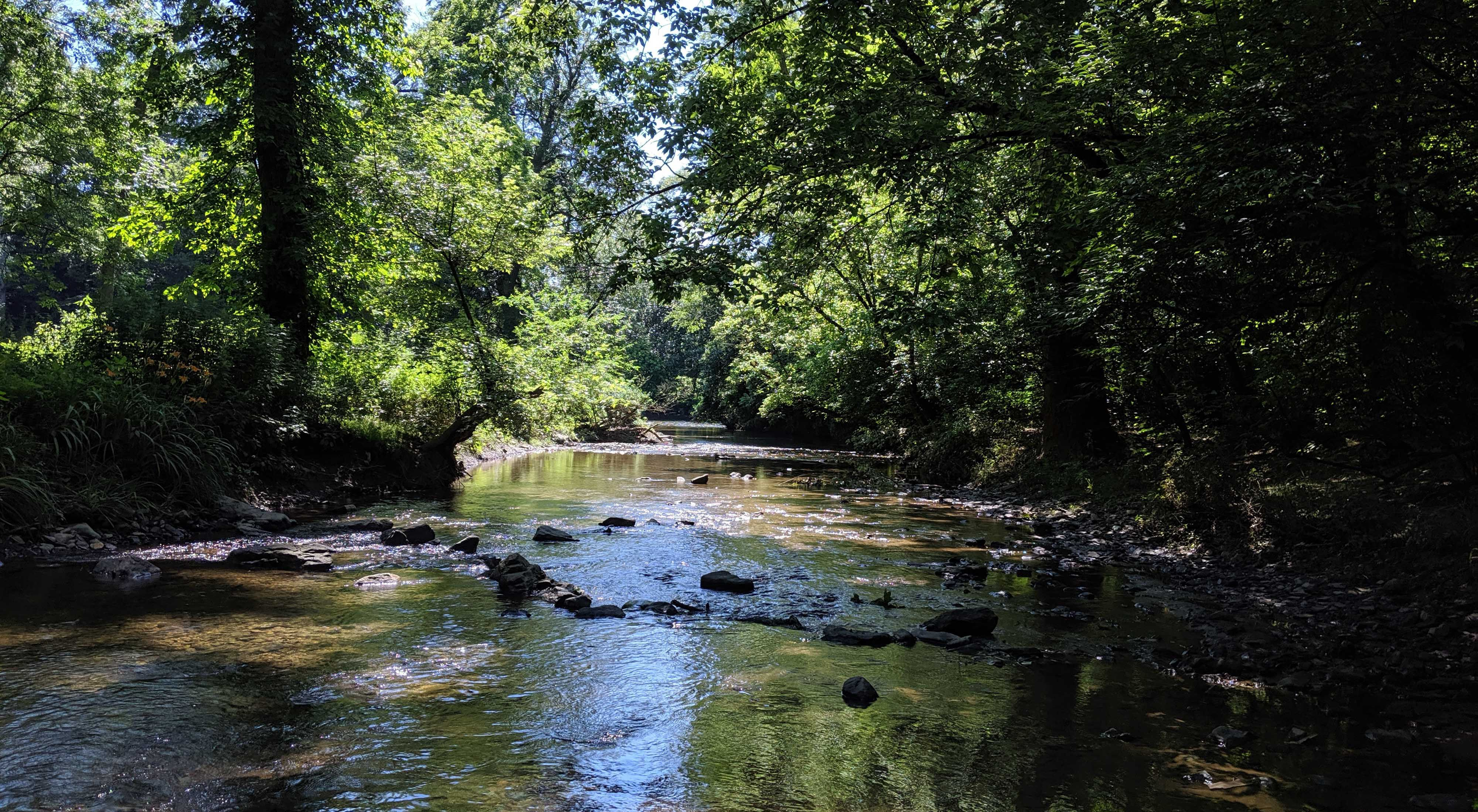 Large rocks protrude above the water of a wide, shallow stream as it flows beneath the shade of a thick forest.