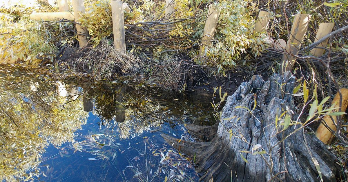 Beaver Dam 200 x 257