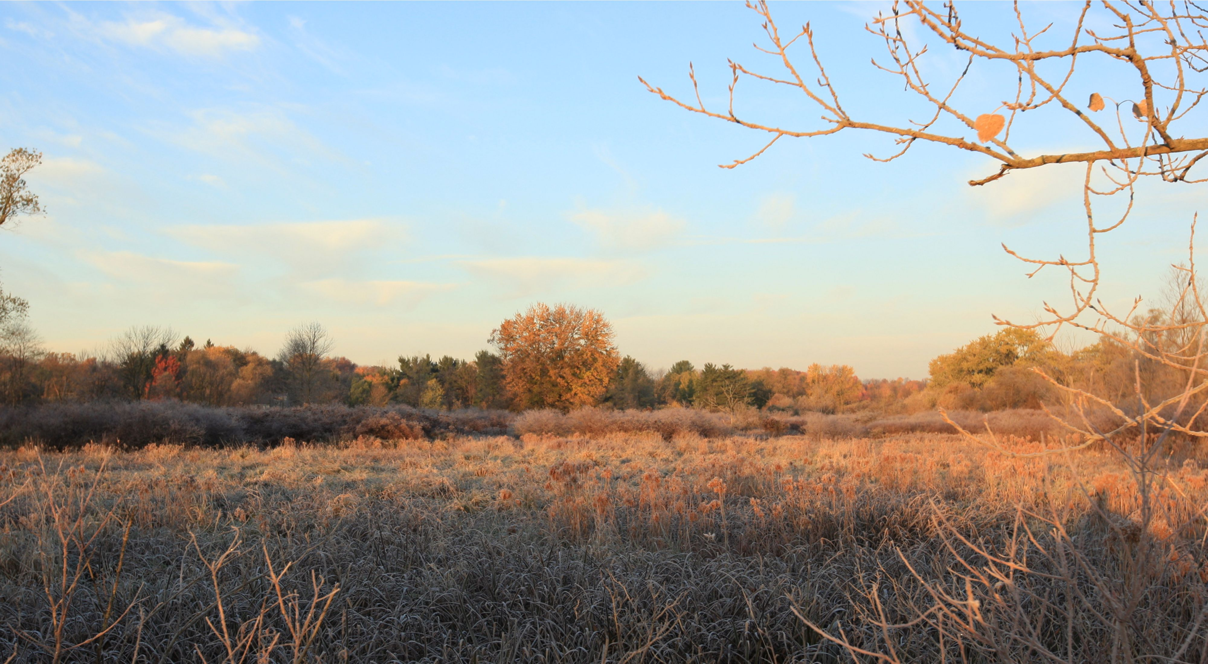 Beck Fen is one of a only a few high-quality fens that remain of the once extensive wetland system that formed the upper watershed of Tinkers Creek