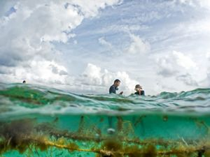 Mariko Wallen and Louis Godfrey are seaweed farmers in Placencia, Belize. They farm two species: Eucheuma (for consumption) and Gracilaria (used for skin treatments and cosmetics). Their farm is part of a program sponsored by TNC to bring seaweed aquaculture to the area in cooperation with the Placencia Fishermen Cooperative.
