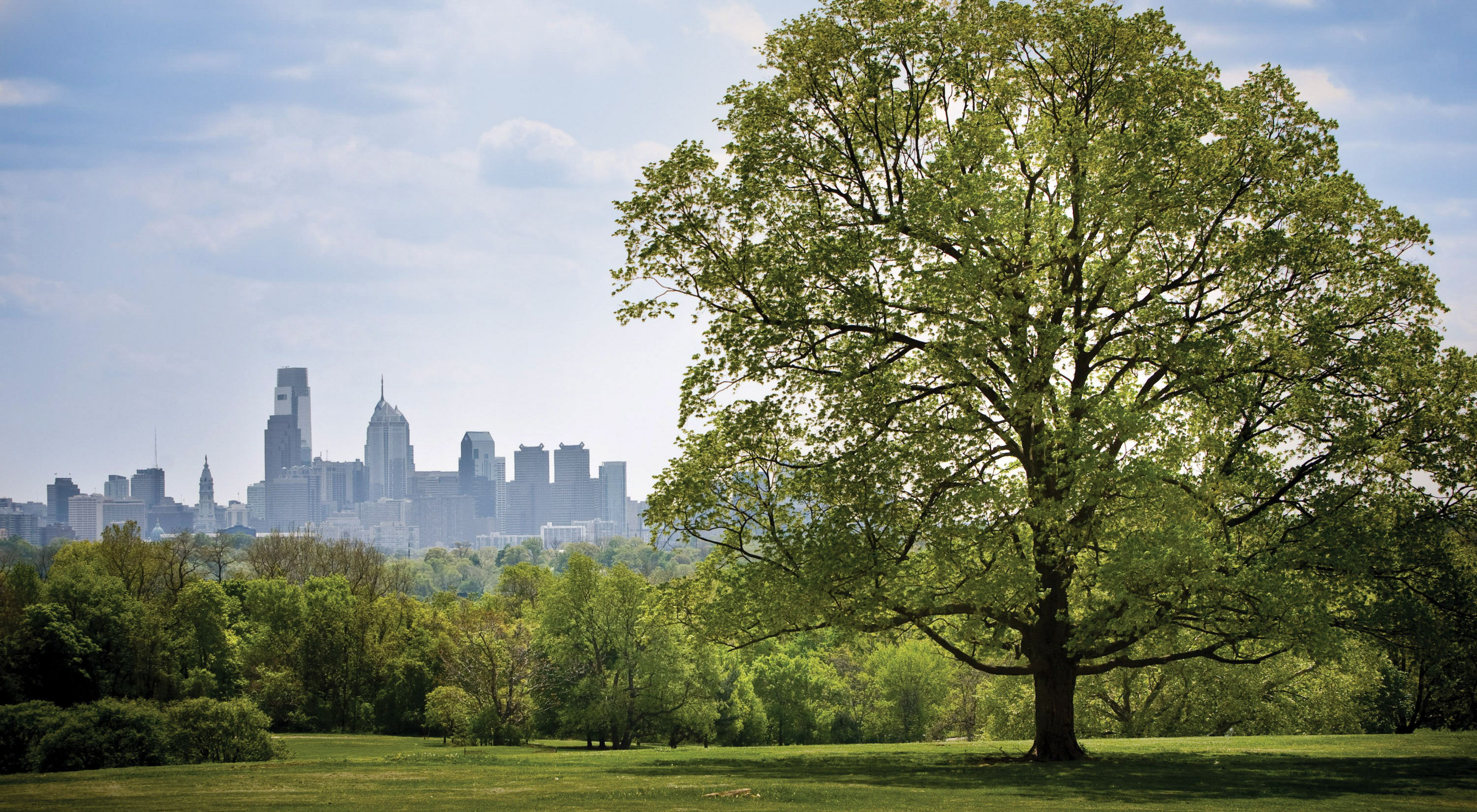A tree in the foreground frames a city skyline in the background.