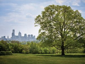The Philadelphia downtown skyline is viewed from a distance from a grassy green park with a tall green leafed tree in the foreground.