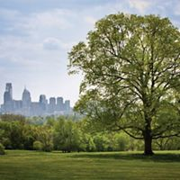Tree in a park with a city skyline in the background.