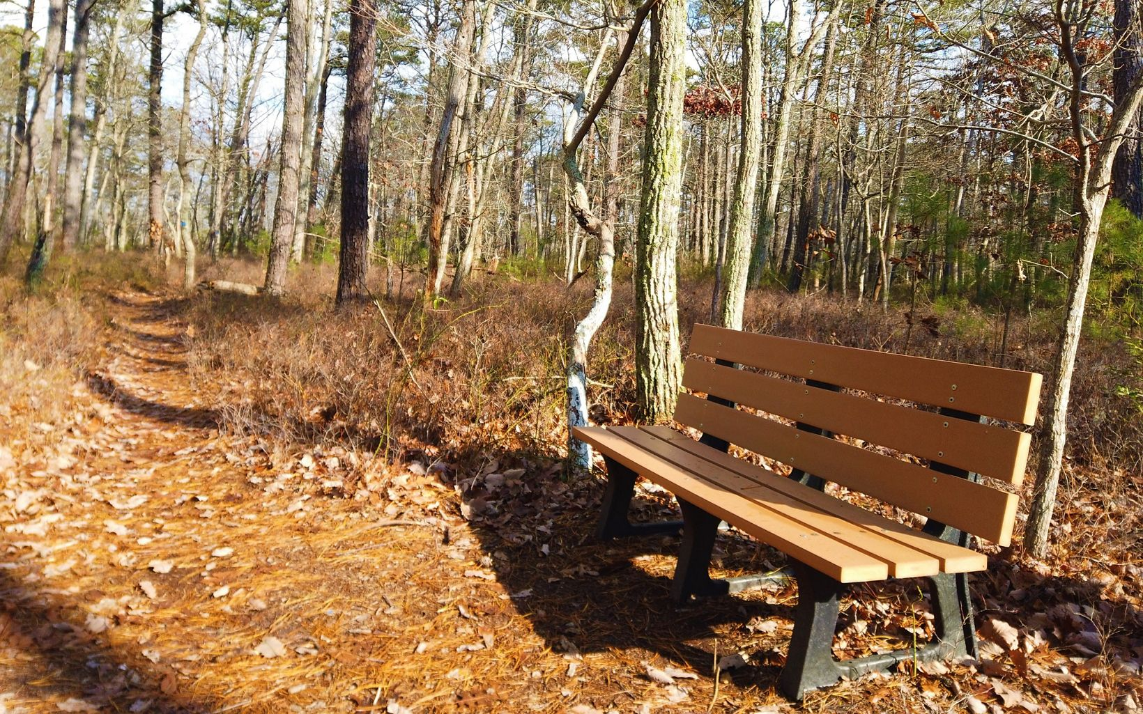A bench along a trail through the woods.