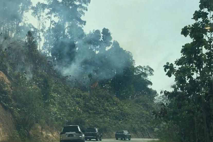 Cars on a road next to a forest with smoke emerging from behind the trees