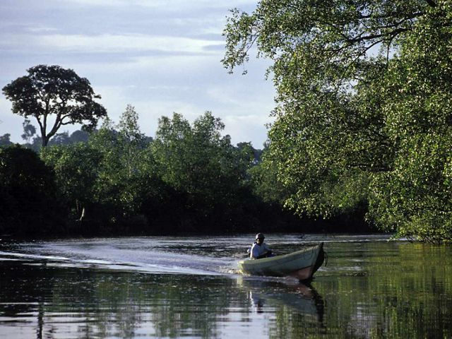 A small boat makes passage through the Berau mangrove system of the Berau River delta of East Kalimantan, Indonesia.