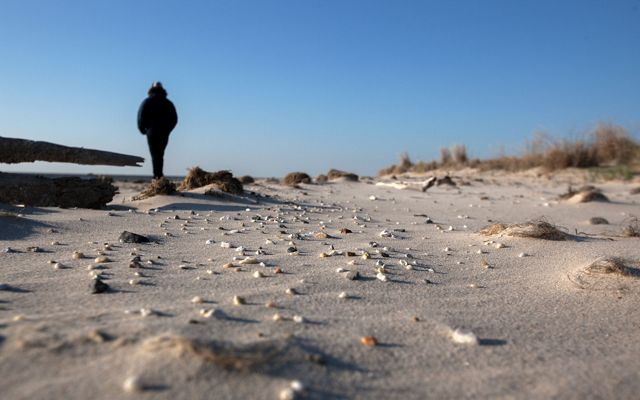 A person wearing a winter coat stands at the edge of a sandy beach filled with small shells.