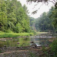 Creek runs through lush green forest.