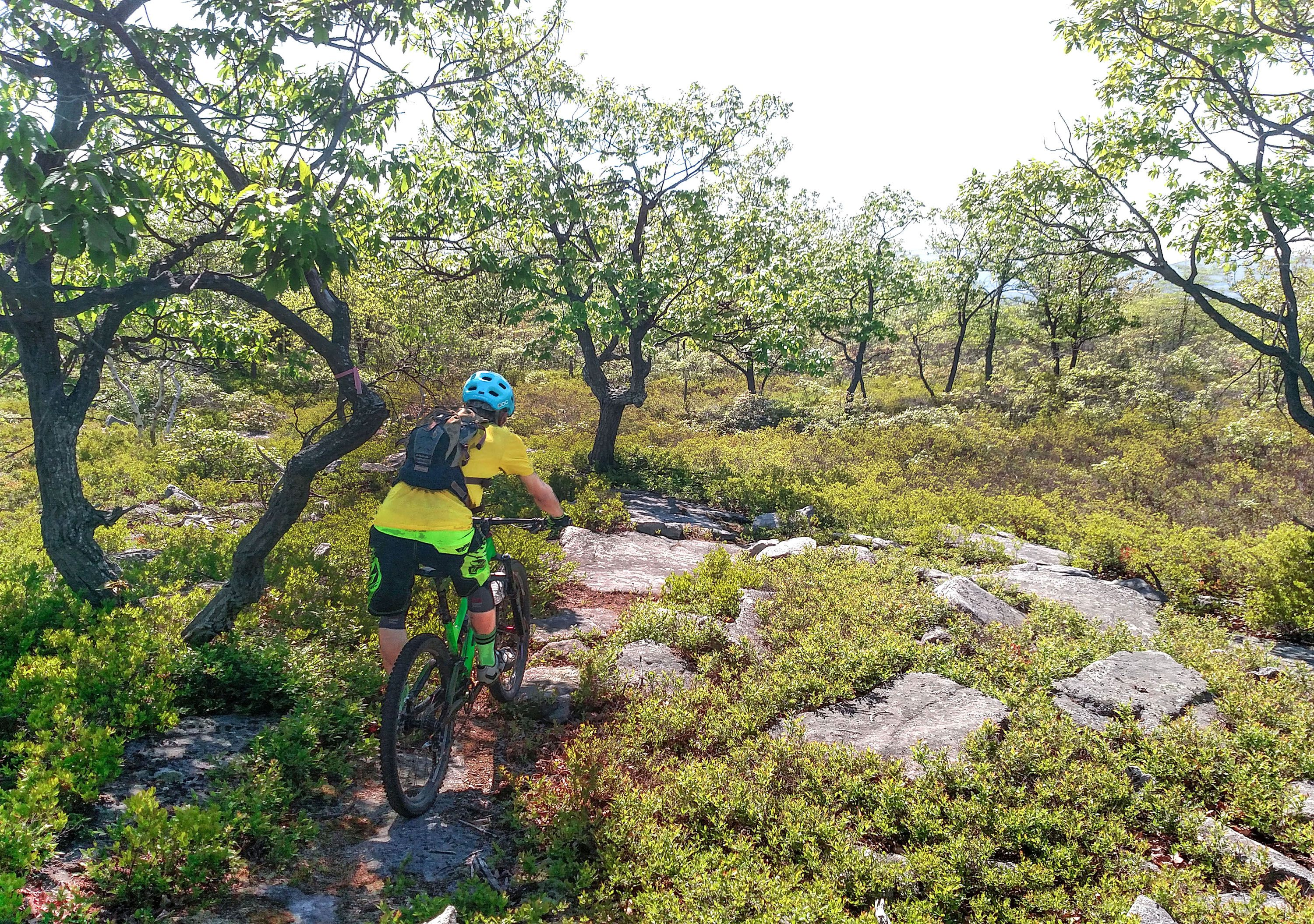 A person wearing a yellow shirt and blue helmet navigates a mountain bike over rocky terrain following a line of short trees.