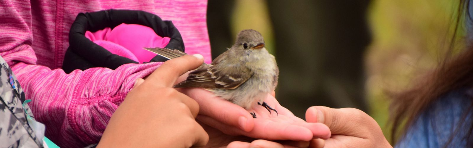 Small bird being identified at the 2018 BioBlitz at TNC's Tensleep Preserve in Wyoming.