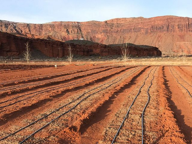 Rows of red soil with irrigation lines on top, in a valley surrounded by red cliffs.