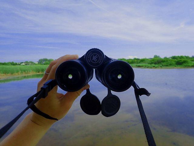 Looking through a pair of binoculars. A hand holds a pair of black binoculars looking out over an open wetland.
