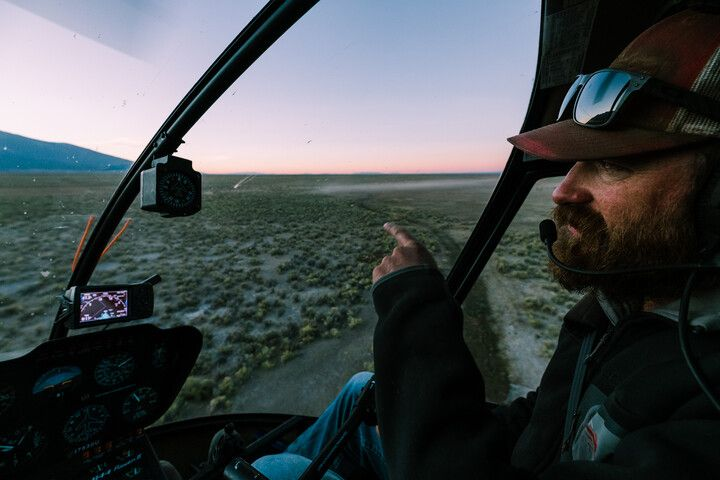 A man in a helicopter monitoring bison herds.
