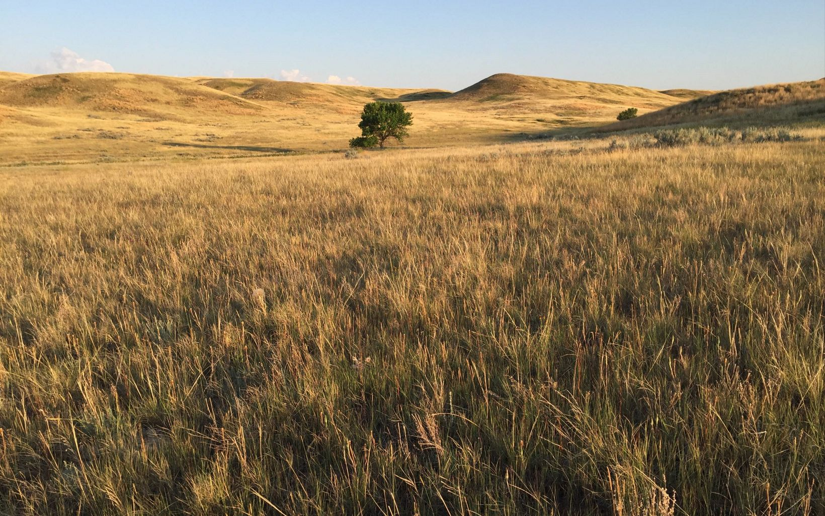 Private ranchland now protected adjacent to Bitter Creek Wilderness Study Area in Montana's Northern Great Plains