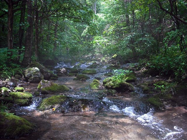 Clear water rushes over rocks in a mountain stream. A beam of sunlight cuts through the deep shade of surrounding trees.