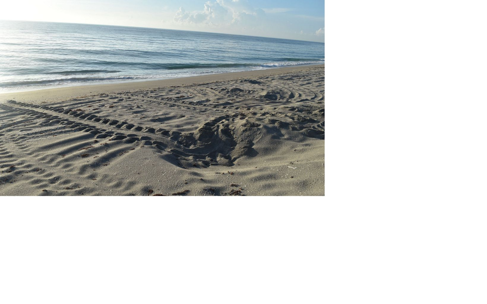 Sea turtle nest and tracks at Blowing Rocks Preserve.