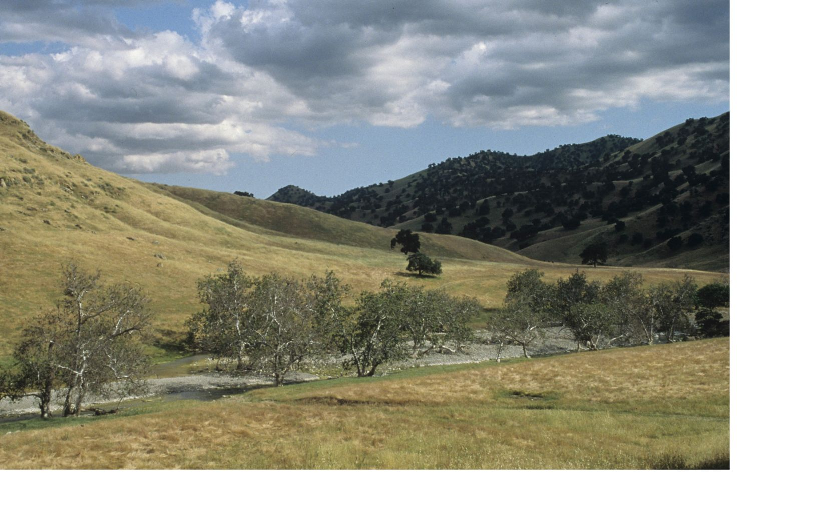 View of wildflowers carpeting grasslands in rolling oak country within the central Diablo Range of the Mount Hamilton wilderness area