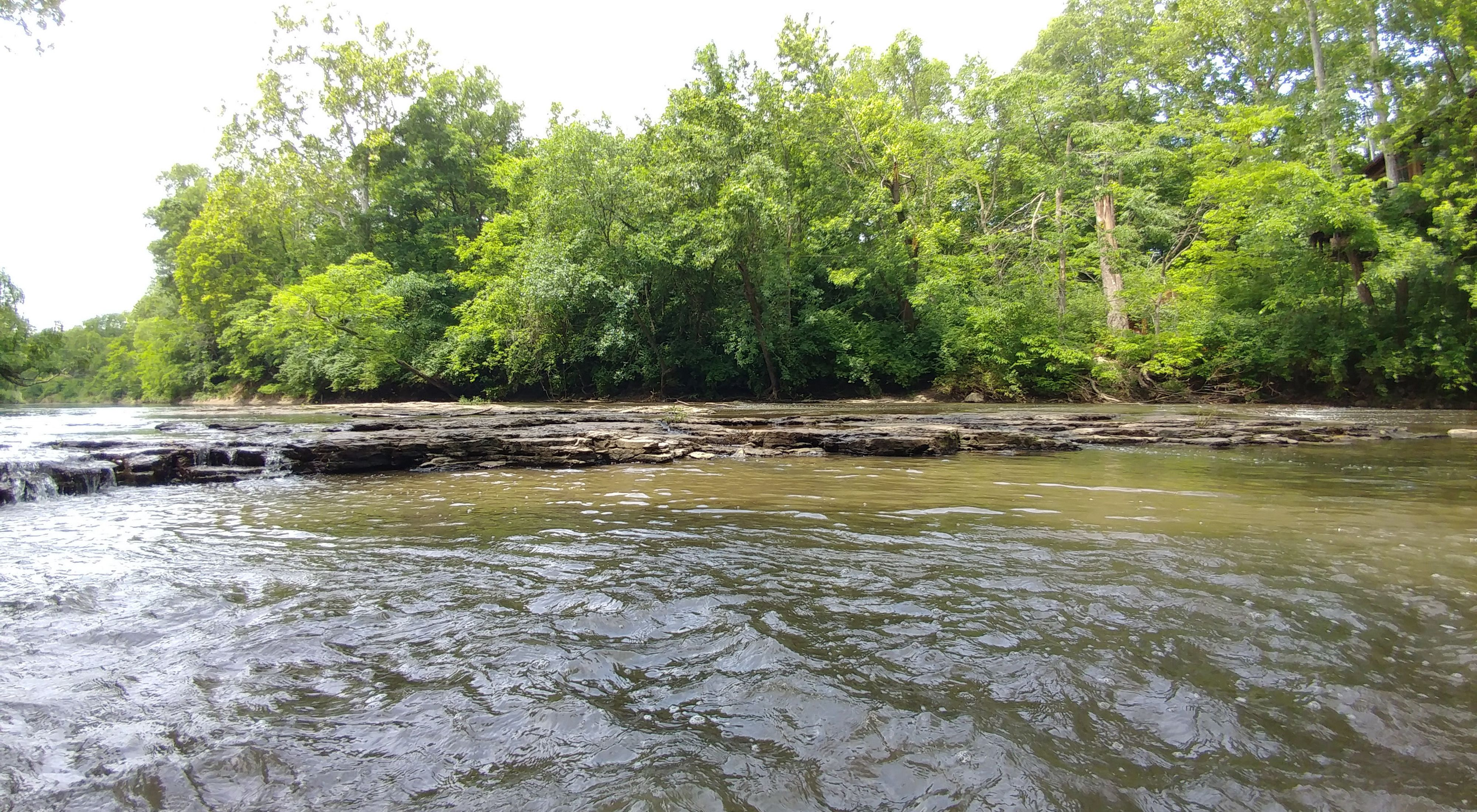 A broad river with trees on its bank.