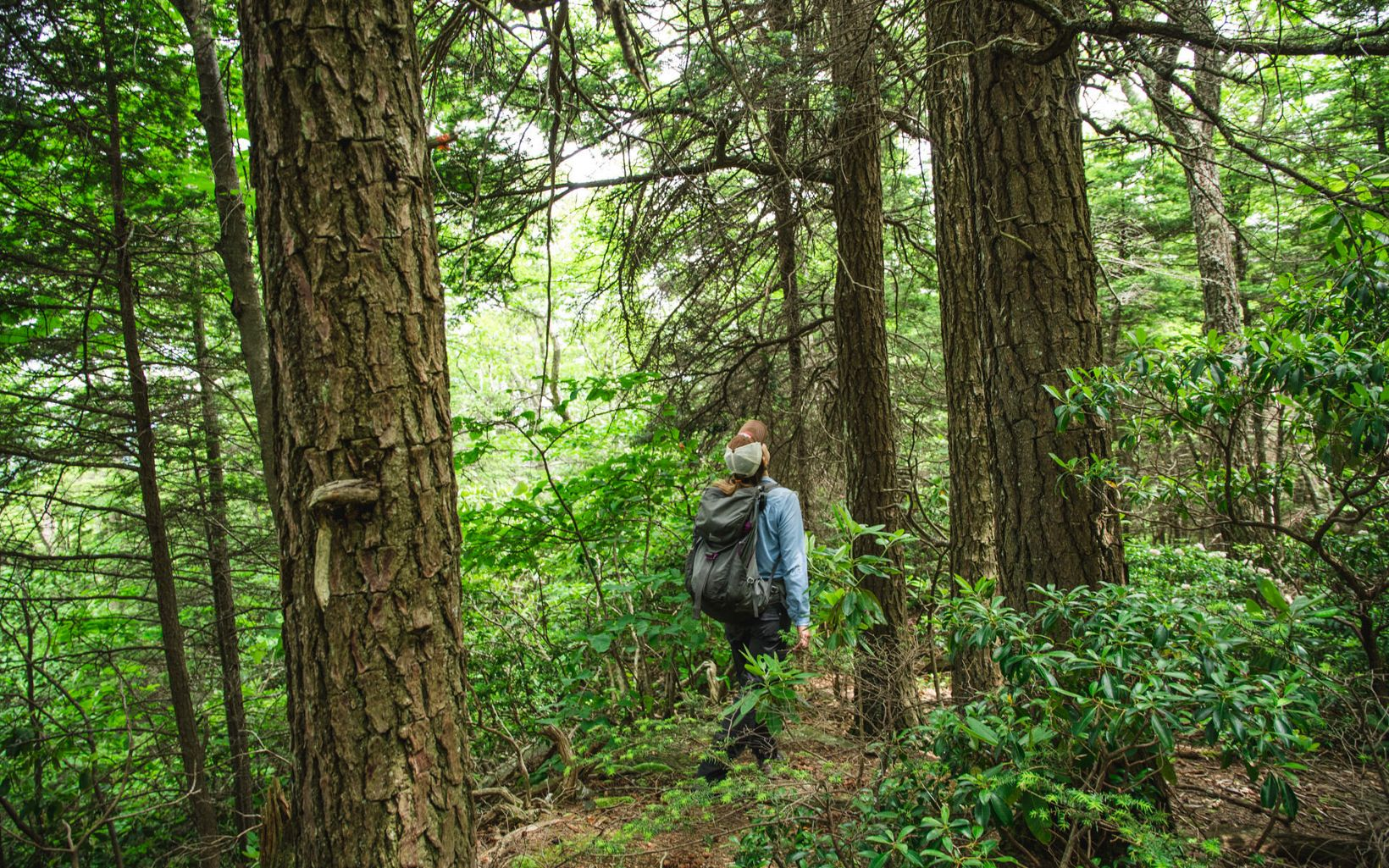 Woman hiking through a forest.